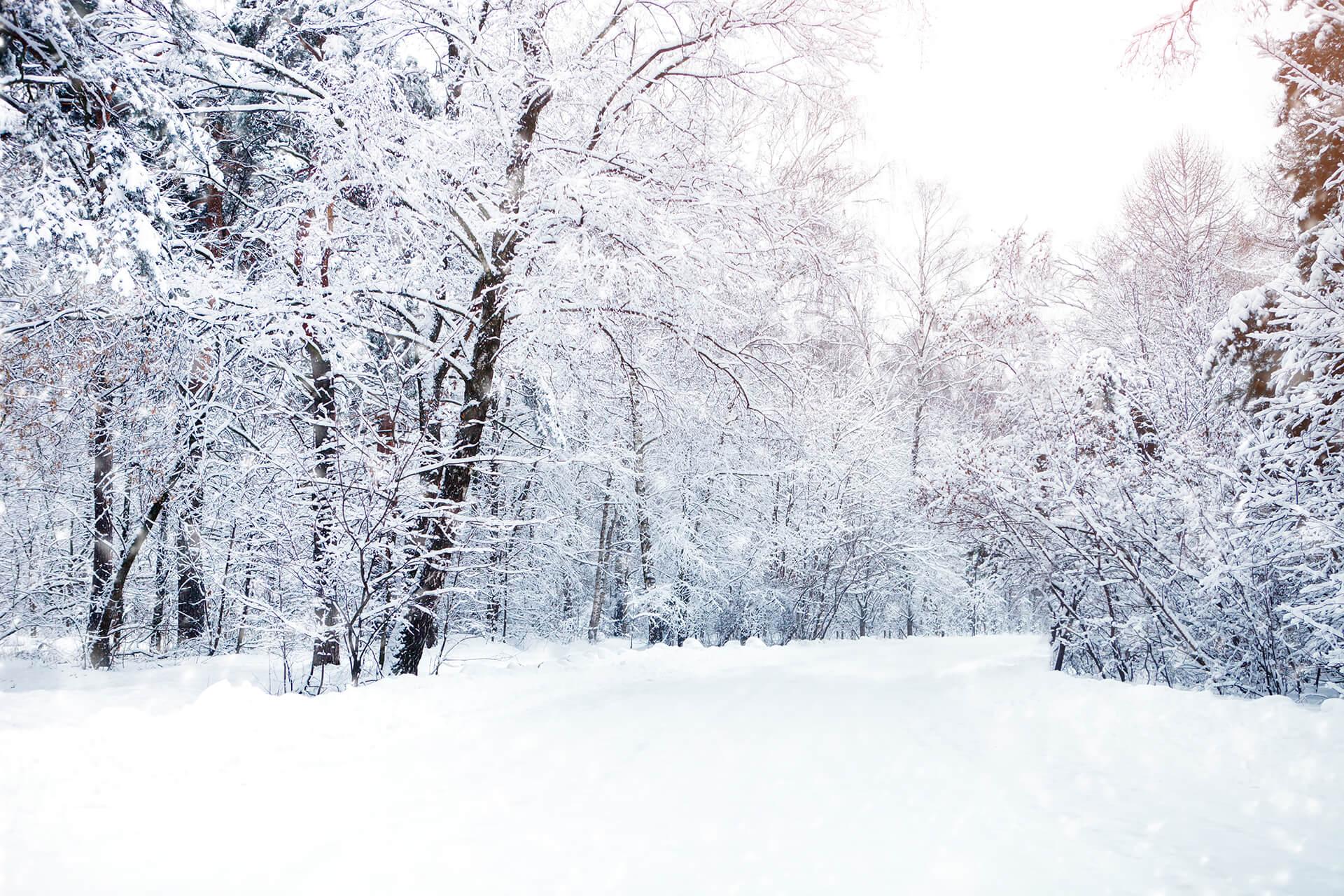Nieve aeróbica